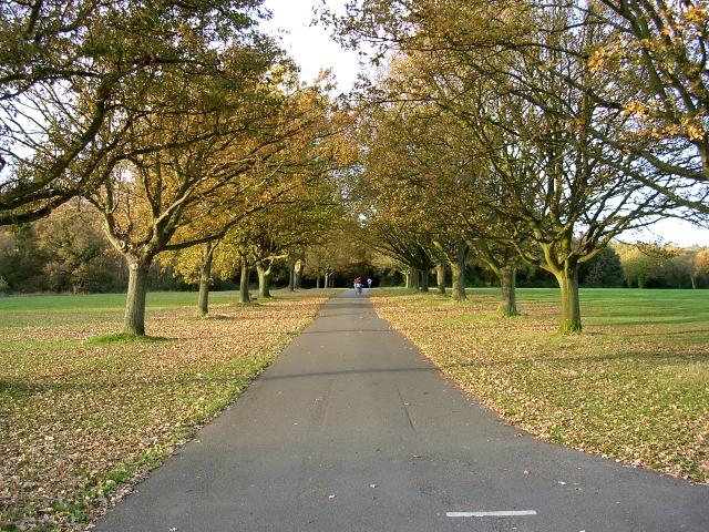 A sunny park, Southampton Common, leaves are fallen inspiring Southampton free