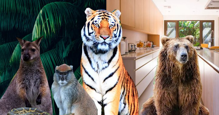 exotic pets collage
