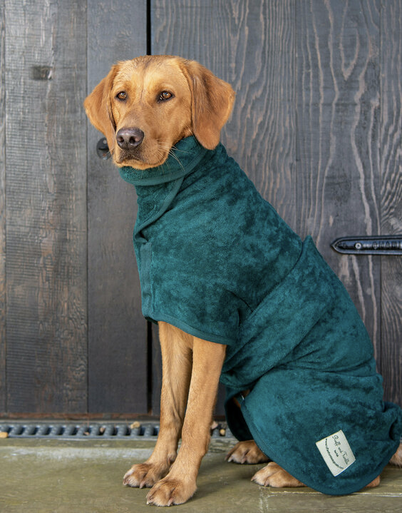 Large dog wearing a green jumper